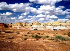 卡拉麦里有蹄类动物自然保护区