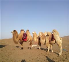 吐鲁番库木塔格沙漠