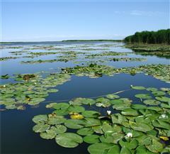 庫爾勒博斯騰湖