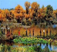 泽普金湖杨国家森林公园