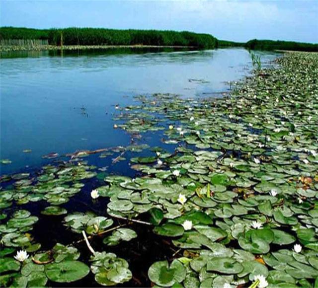 库尔勒莲花湖