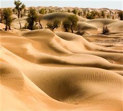 新疆塔克拉玛干沙漠