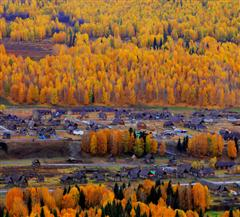 禾木.秋景