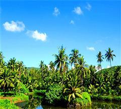 [臻品曼谷-芭提雅-普吉岛11日]独家国际五星椰子岛别墅|一岛一酒店