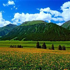新疆伊犁唐布拉