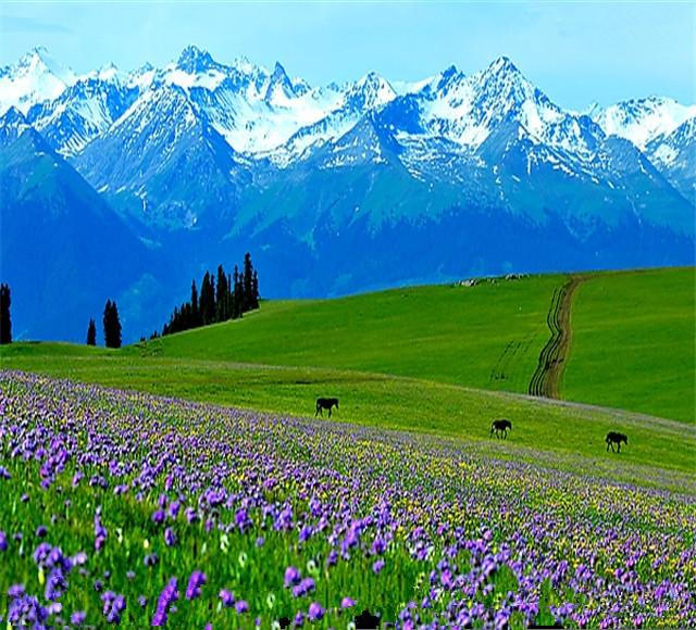 [那拉提-昭苏-喀拉峻-赛里木湖4日]新疆摄影家协会设计深度游线路