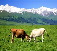那拉提空中草原