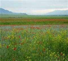 昭苏夏特草原
