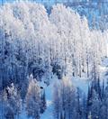 冬季喀纳斯