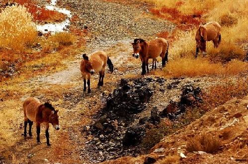 [北疆深度-五彩湾-喀纳斯-赛里木湖-巴音布鲁克草原8日]