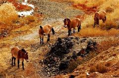 [北疆深度-五彩湾-喀纳斯-赛里木湖-巴音布鲁克草原8日]无任何进店购物|5A级景区入住|餐饮服务升级