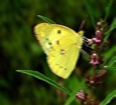 阿勒泰蝴蝶沟