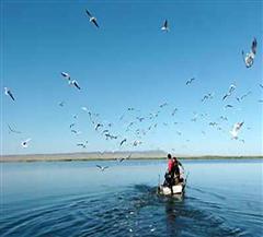 福海乌伦古湖