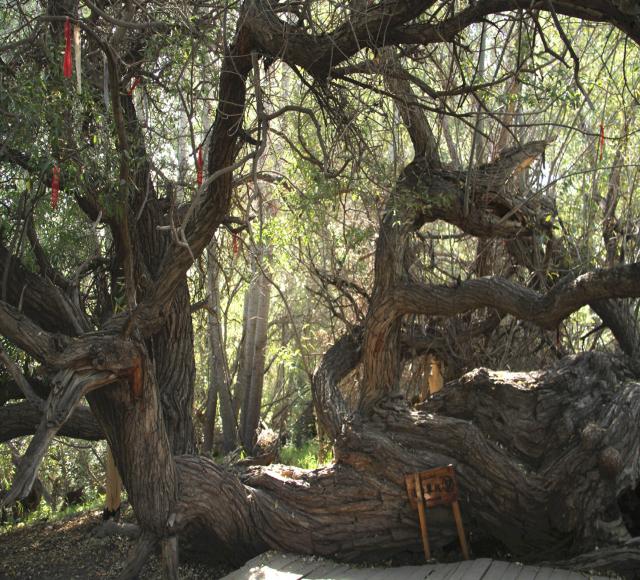天山神木园