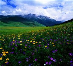 塔城吐尔加辽草原