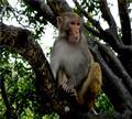 三亚南湾猴岛