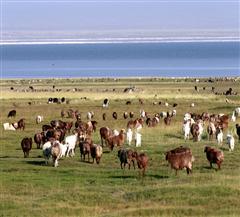 巴里坤草原