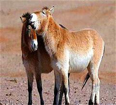 蹄类动物保护区