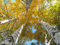 塔城乌苏佛山国家森林公园