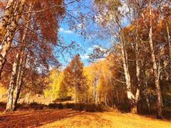 禾木有舍 美景